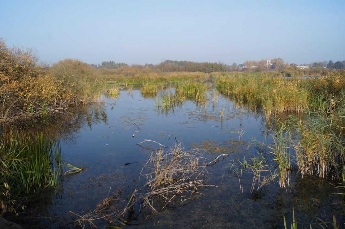 Dbajmy o środowisko naturalne (1)
