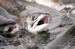 Szkolenie dot. dobrostanu ryb