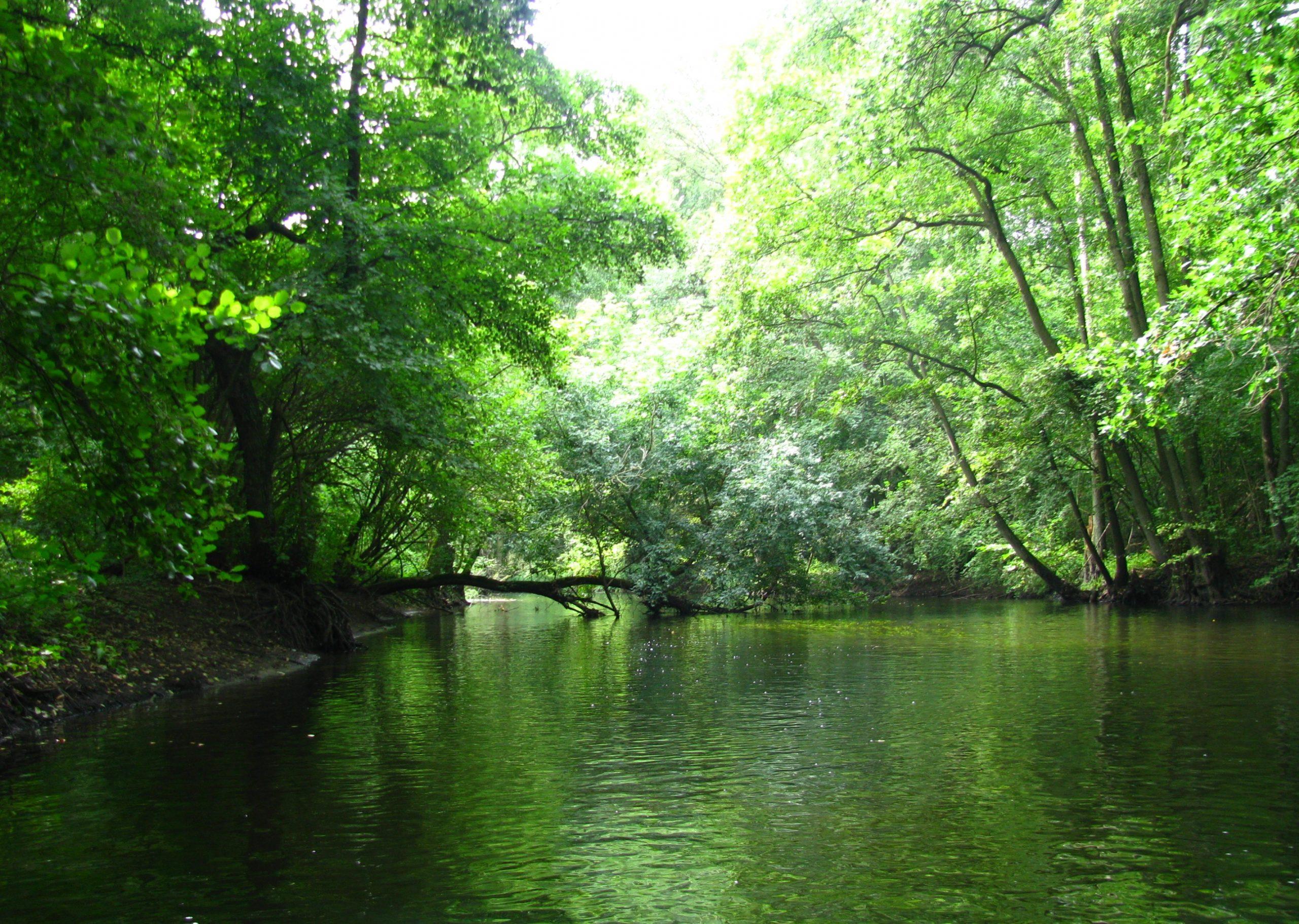 Rzeka Roku 2016 (1)